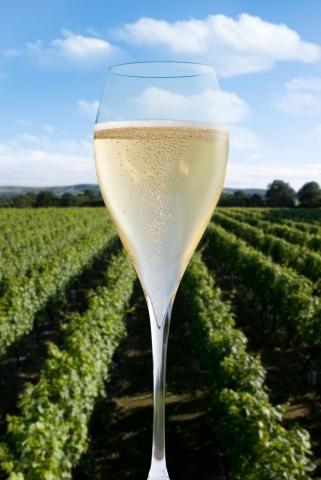 Sparkling wine at Ridgeview Wines Estate